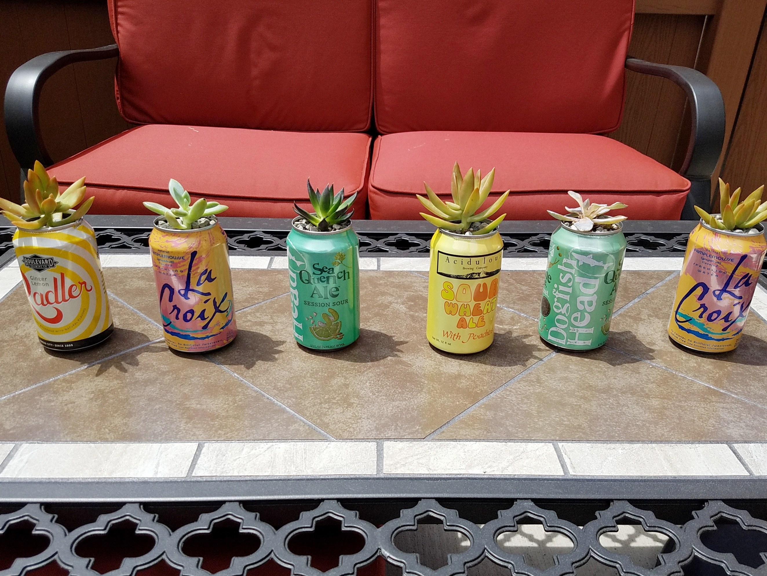 Succulents in beer cans